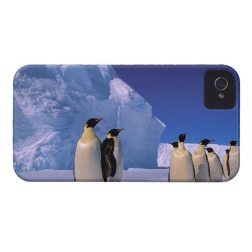 Antarctica, Australian Antarctic Territory, 7 Blackberry Case