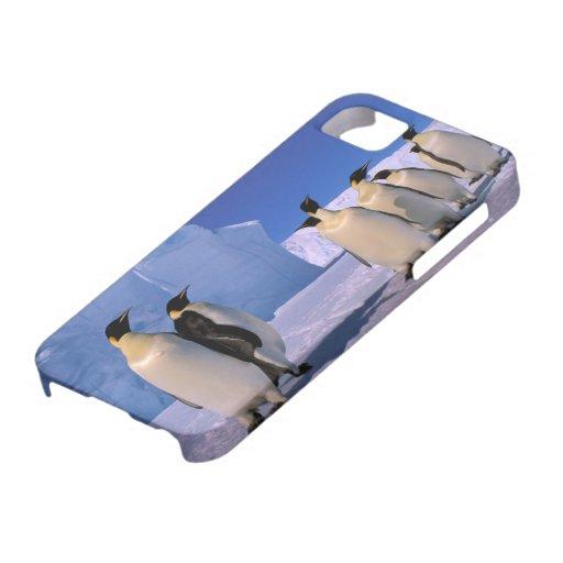 Antarctica, Australian Antarctic Territory, 7 Apple Iphone5 Case