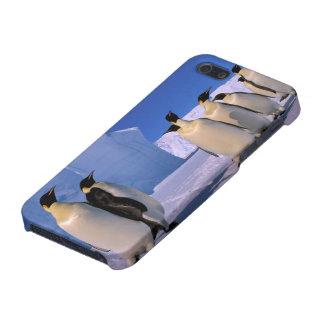 Antarctica, Australian Antarctic Territory, 7 Case For iPhone 5/5S