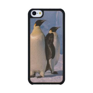 Antarctica, Australian Antarctic Territory, 7 Maple iPhone 5C Case