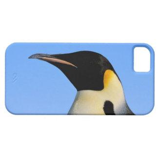Antarctica, Australian Antarctic Territory, 8 Barely There iPhone 5 Case