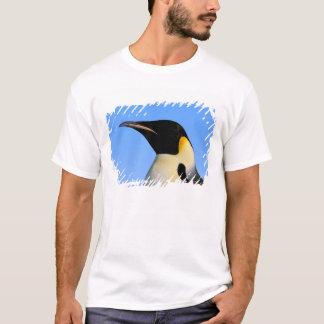 Antarctica, Australian Antarctic Territory, 8 T-Shirt