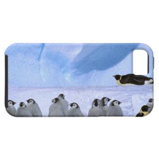 Antarctica, Australian Antarctic Territory, Cape iPhone 5 Cases