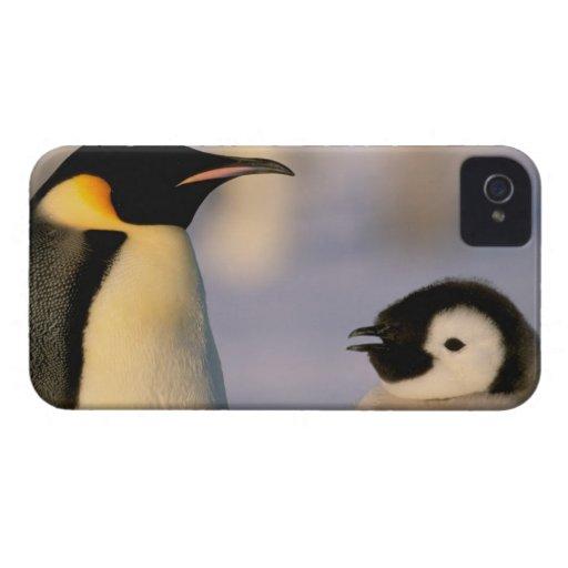 Antarctica, Australian Antarctic Territory, Blackberry Bold Cases