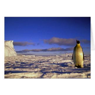 Antarctica, Cape Darnley. Emperor Penguin Card