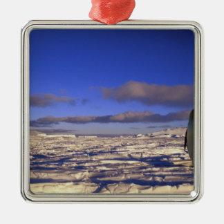 Antarctica, Cape Darnley. Emperor Penguin Silver-Colored Square Decoration