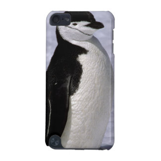 Antarctica Chinstrap penguin 2 iPod Touch 5G Cases