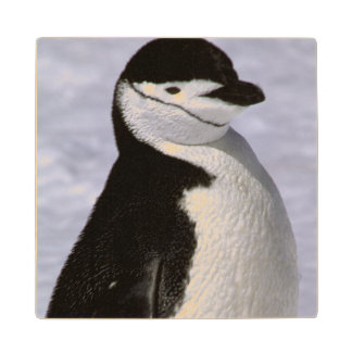 Antarctica. Chinstrap penguin 2 Wood Coaster