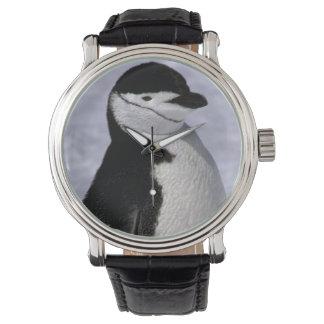 Antarctica. Chinstrap penguin 2 Wristwatch