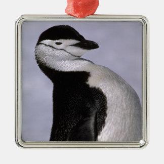 Antarctica. Chinstrap penguin Christmas Ornament