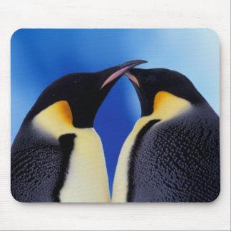 Antarctica, Emperor Penguin (Aptenodytes 2 Mouse Mat