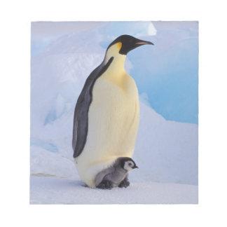 Antarctica, Emperor Penguin (Aptenodytes Notepad