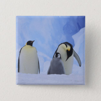 Antarctica. Emperor penguins and chick 15 Cm Square Badge