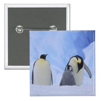 Antarctica. Emperor penguins and chick 15 Cm Square Badge