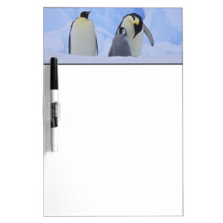 Antarctica. Emperor penguins and chick Dry Erase Board