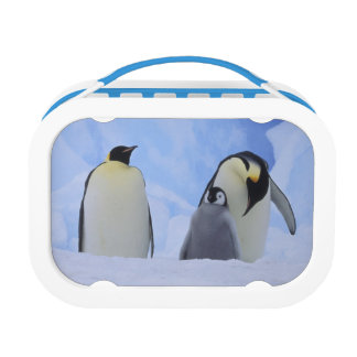 Antarctica. Emperor penguins and chick Lunchboxes