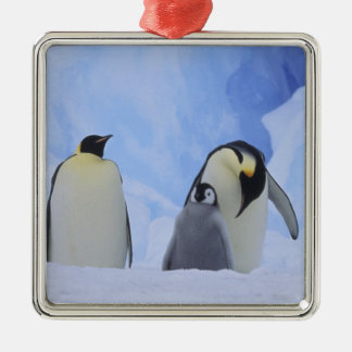Antarctica. Emperor penguins and chick Silver-Colored Square Decoration