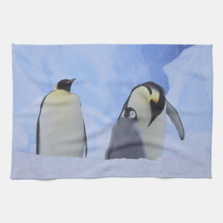 Antarctica. Emperor penguins and chick Tea Towel