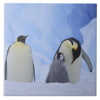 Antarctica. Emperor penguins and chick Tile