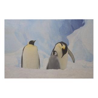 Antarctica. Emperor penguins and chick Wood Wall Decor