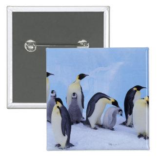 Antarctica, Emporer Penguin ((Aptenodytes 15 Cm Square Badge