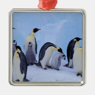 Antarctica, Emporer Penguin ((Aptenodytes Christmas Ornament