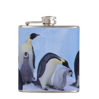 Antarctica, Emporer Penguin ((Aptenodytes Hip Flask