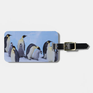 Antarctica, Emporer Penguin ((Aptenodytes Luggage Tag