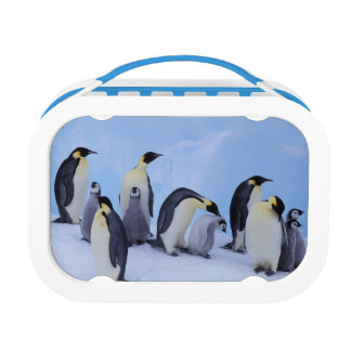 Antarctica, Emporer Penguin ((Aptenodytes Lunch Box