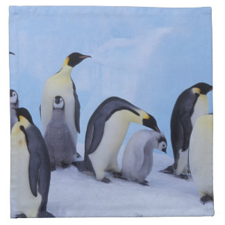 Antarctica, Emporer Penguin ((Aptenodytes Napkin