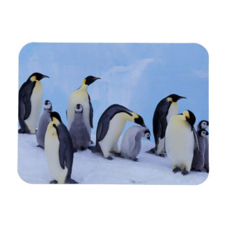 Antarctica, Emporer Penguin ((Aptenodytes Rectangular Photo Magnet