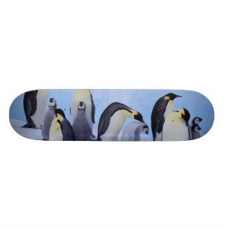Antarctica, Emporer Penguin ((Aptenodytes Skateboard Decks