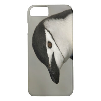 Antarctica, Half Moon Island. Close-up of adult iPhone 8/7 Case