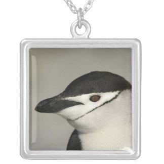 Antarctica, Half Moon Island. Close-up of adult Silver Plated Necklace