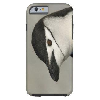 Antarctica, Half Moon Island. Close-up of adult Tough iPhone 6 Case