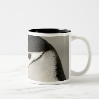 Antarctica, Half Moon Island. Close-up of adult Two-Tone Coffee Mug