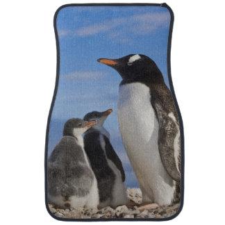 Antarctica, Neko Cove (Harbour). Gentoo penguin 2 Car Mat