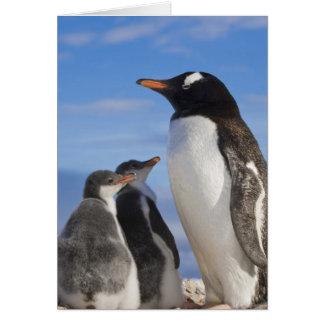 Antarctica, Neko Cove (Harbour). Gentoo penguin 2 Card