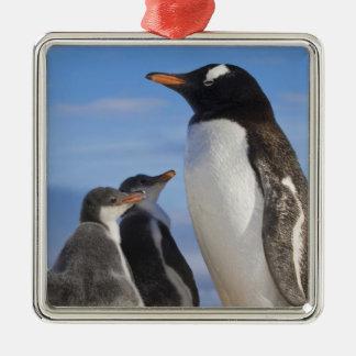 Antarctica, Neko Cove (Harbour). Gentoo penguin 2 Christmas Ornament