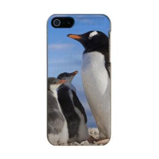 Antarctica, Neko Cove (Harbour). Gentoo penguin 2 Incipio Feather® Shine iPhone 5 Case