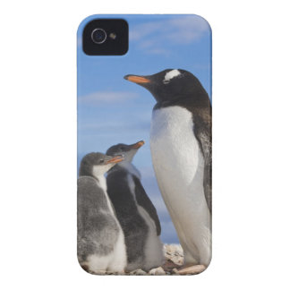 Antarctica, Neko Cove (Harbour). Gentoo penguin 2 iPhone 4 Cases