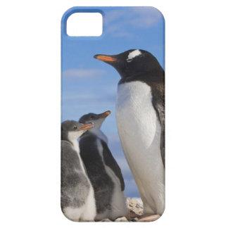 Antarctica, Neko Cove (Harbour). Gentoo penguin 2 iPhone 5 Case
