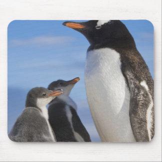 Antarctica, Neko Cove (Harbour). Gentoo penguin 2 Mouse Mat