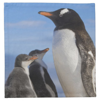 Antarctica, Neko Cove (Harbour). Gentoo penguin 2 Napkin