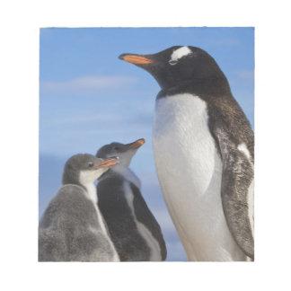 Antarctica, Neko Cove (Harbour). Gentoo penguin 2 Notepad