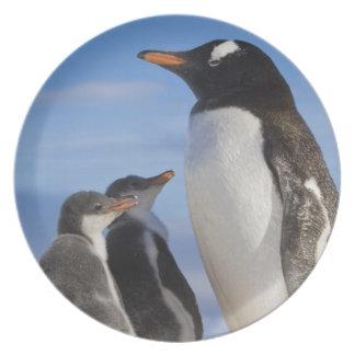 Antarctica, Neko Cove (Harbour). Gentoo penguin 2 Plate