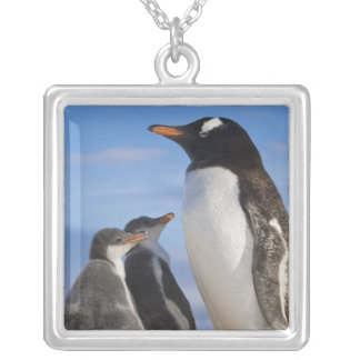 Antarctica, Neko Cove (Harbour). Gentoo penguin 2 Silver Plated Necklace