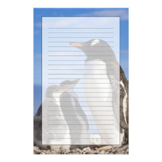 Antarctica, Neko Cove (Harbour). Gentoo penguin 2 Stationery