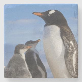 Antarctica, Neko Cove (Harbour). Gentoo penguin 2 Stone Coaster