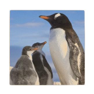 Antarctica, Neko Cove (Harbour). Gentoo penguin 2 Wood Coaster